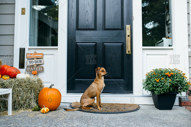 Dog in an autumn setting