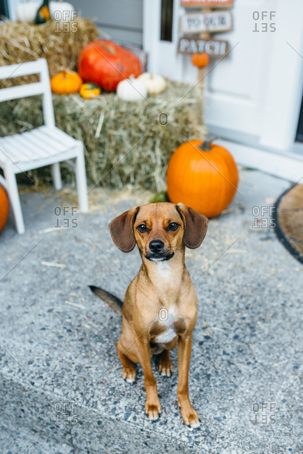 A dog in an autumn setting