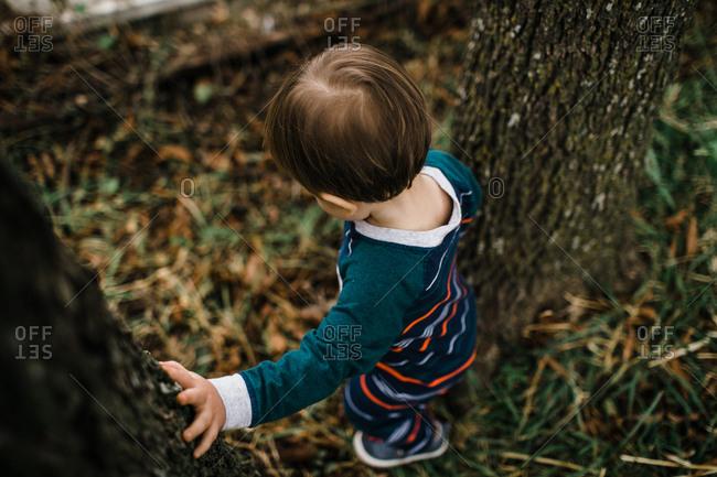 Little boy walking between two trees