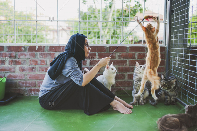 Woman playing with cats and a feather toy