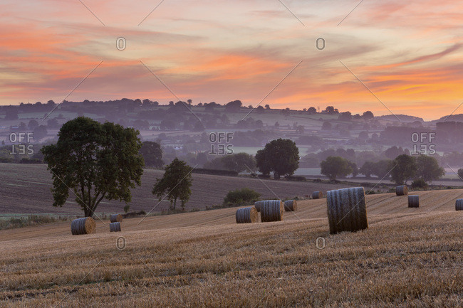 Round hay bales in stubble field at dawn, Chipping Campden, Cotswolds, Gloucestershire, England, United Kingdom, Europe