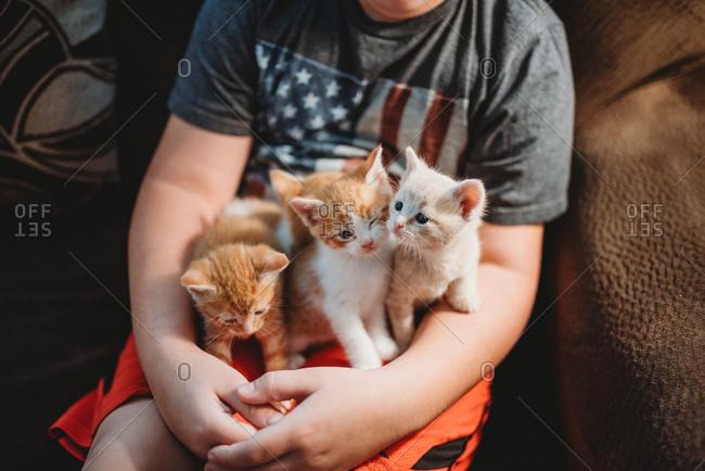 Boy holding litter of kittens