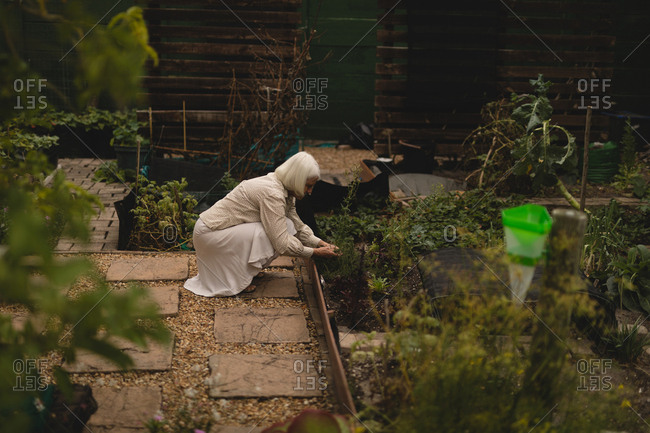 Senior woman gardening a plant near house