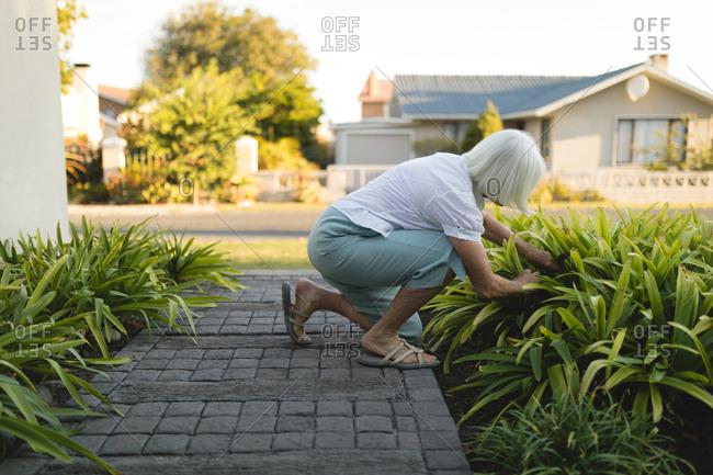 Senior woman gardening on a sunny day
