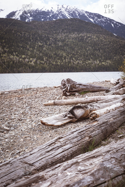 Tree trunks on riverbank against mountain