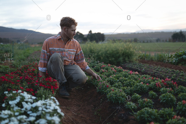 Young farmer working in the field