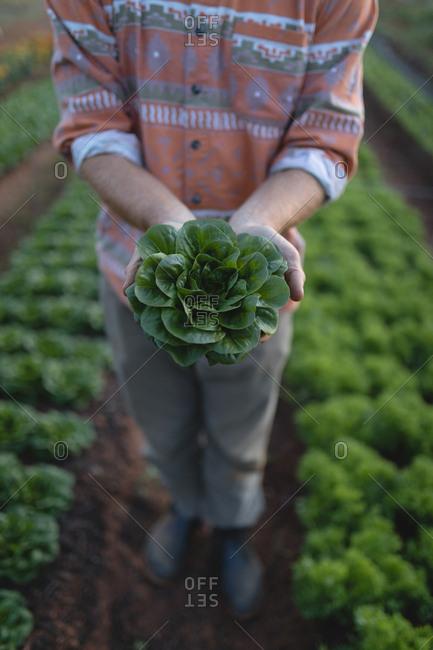 Farmer holding a fresh plant in the farm