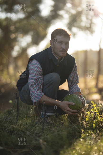 Young farmer holding a watermelon in the field