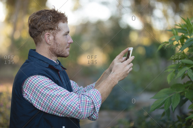Farmer taking picture of plant with mobile phone in the field