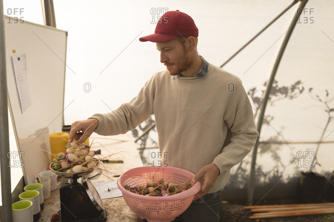 Farmer holding basket of root vegetables in greenhouse