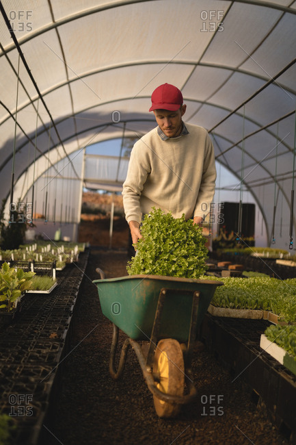 Young farmer working in greenhouse