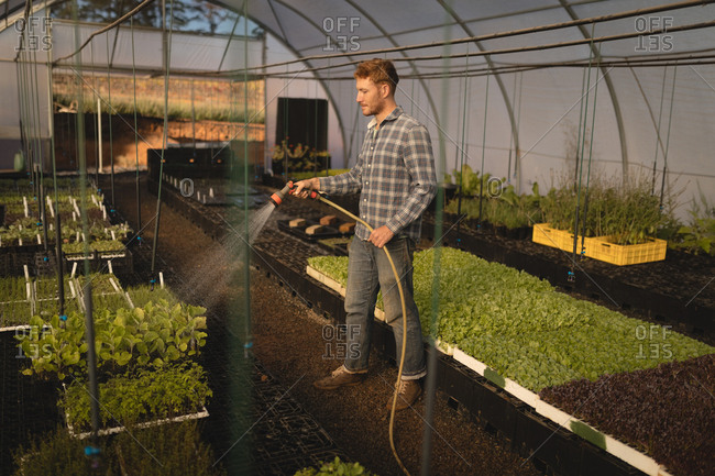 Young farmer watering plants in greenhouse