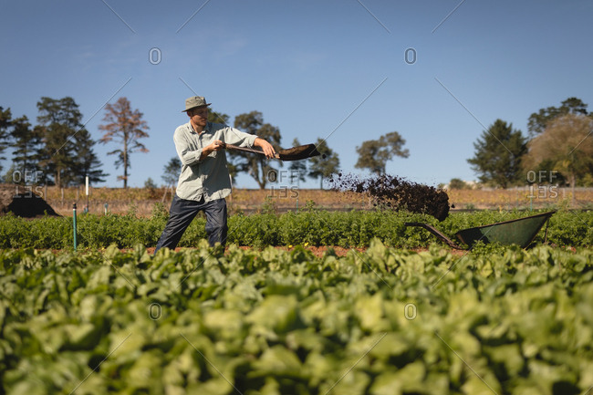 Farmer working in field on a sunny day