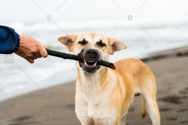 View of dog carrying stick to its master