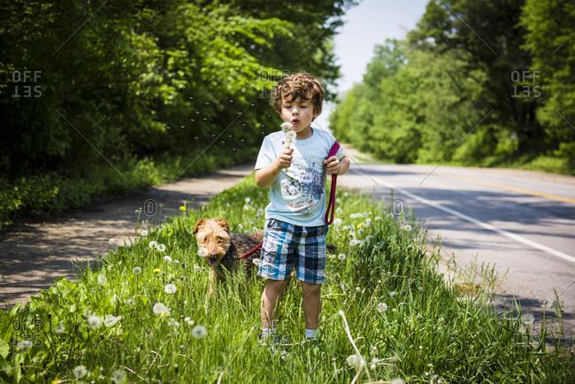 Boy blowing dandelions walking dog