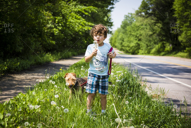 Boy blowing dandelions walking dog