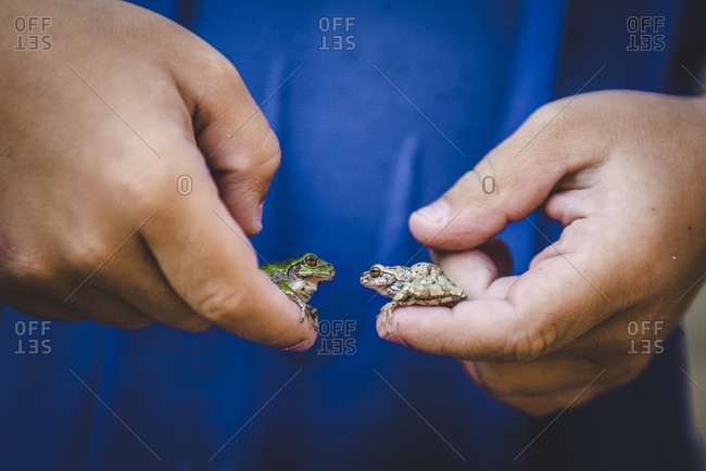 Boy holding two frogs