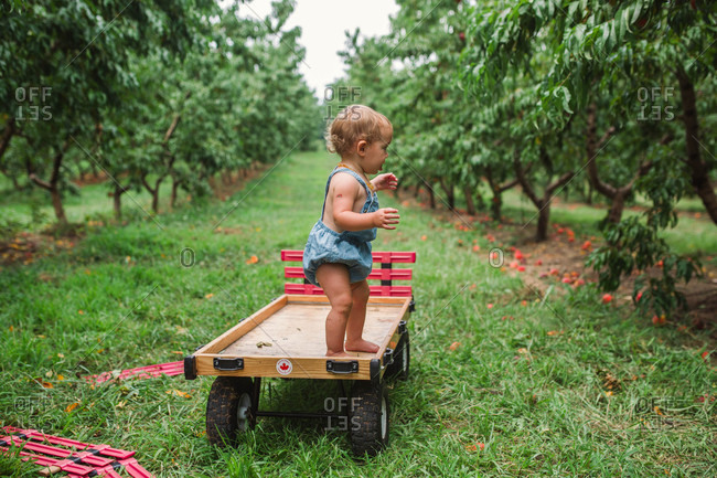 Baby standing on a car in an orchard