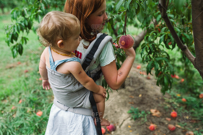 Girl carrying baby sister and picking peaches