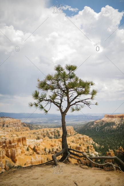 USA, Utah, Single tree in Bryce Canyon National Park