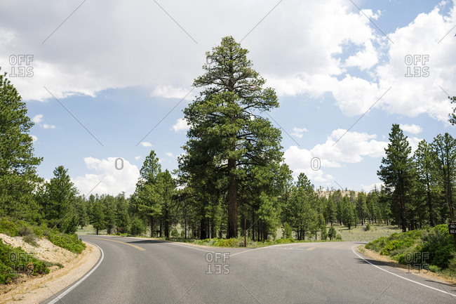 USA, Utah, Empty forked road in Bryce Canyon National Park
