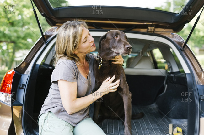 Woman stroking Labrador Retriever in car trunk