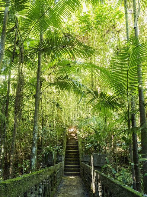Australia, Queensland, Steps in rainforest