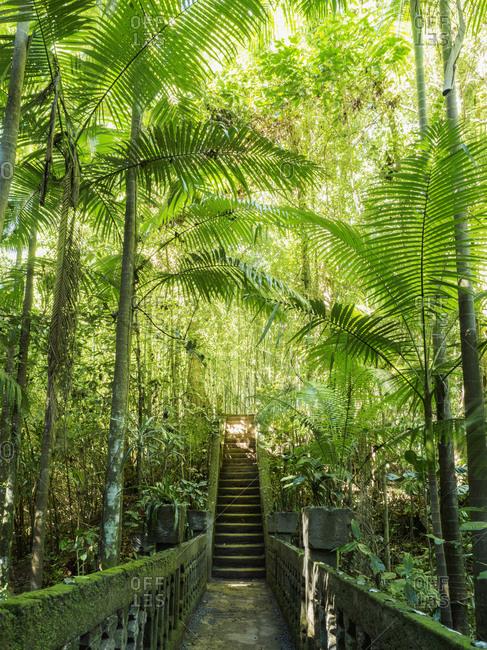 Australia, Queensland, Steps in rainforest