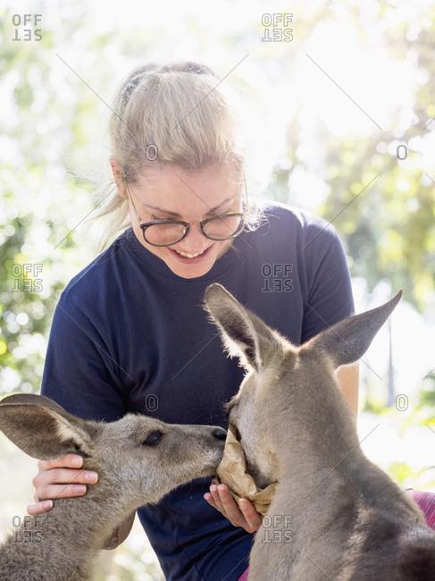Young woman feeding Eastern grey kangaroos (Macropus giganteus) and smiling