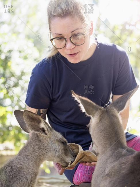 Young woman feeding Eastern grey kangaroos (Macropus giganteus)