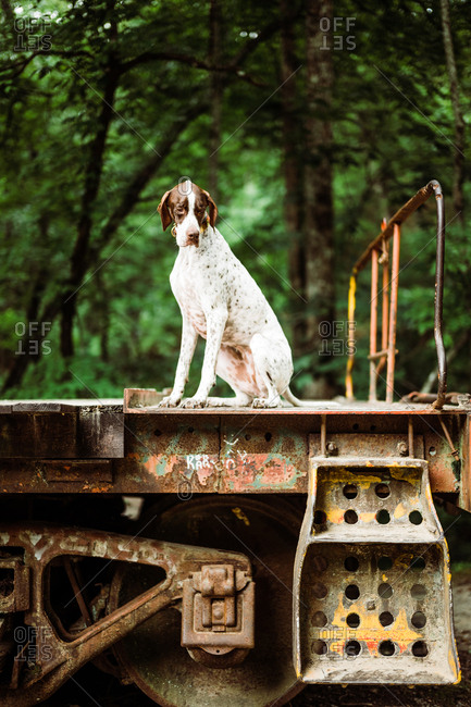 Dog sitting on old railroad car