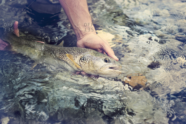 Slovenia- man fly fishing in Soca river catching a fish