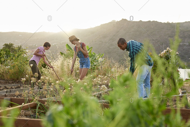 Three friends preparing a vegetable patch