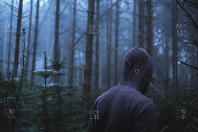 Man in hoody in spooky misty pine forest Rear view