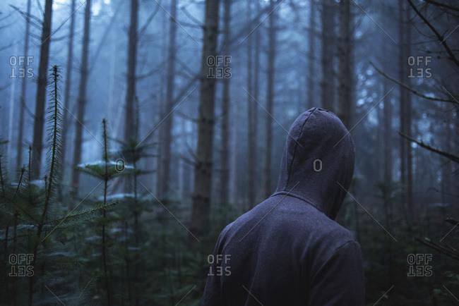Man in hoody in spooky misty pine forest Rear view