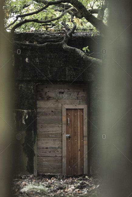 Old world war 2 shelter with wooden door in forest