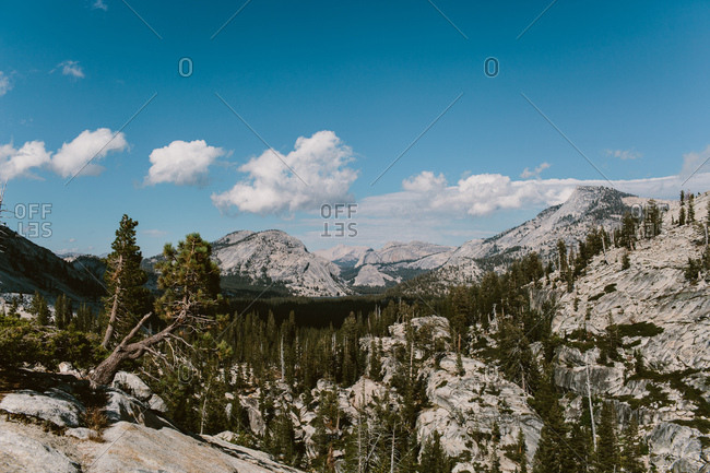 Landscape of Yosemite forest