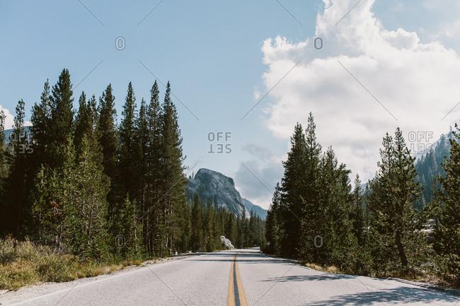 Road through Yosemite forest