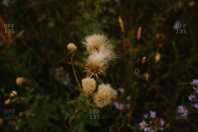Fuzzy wildflowers