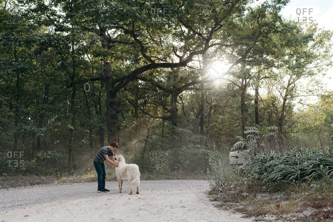 Boy petting Great Pyrenees on a dirt road