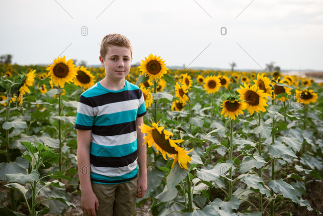 Teenage boy standing in a field of sunflowers
