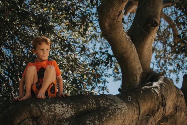 Boy climbs tree