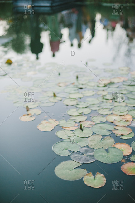 Reflection of people in pond with lily pads in Moncarapacho, Portugal
