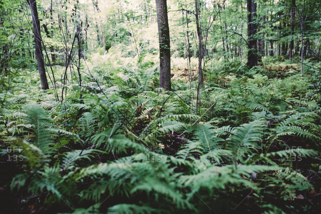 A fern covered forest