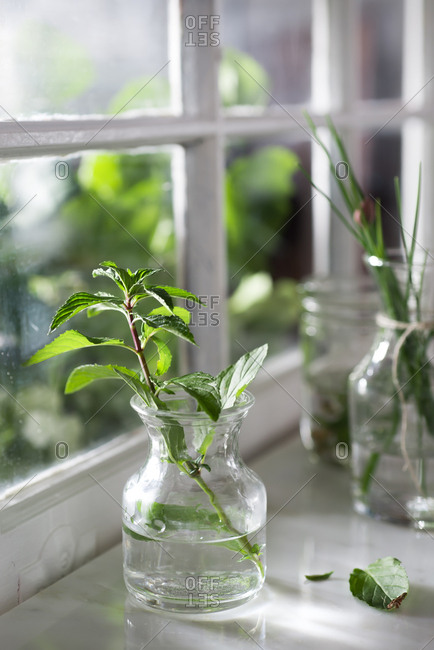 Fresh mint and chives on a window sill
