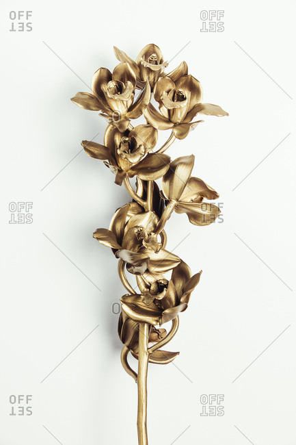 Gold orchids branch - Offset Collection