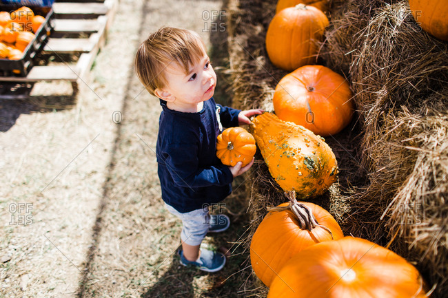 Toddler boy at pumpkin display