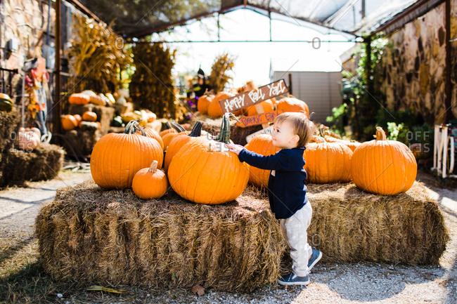 Toddler boy at a pumpkin display