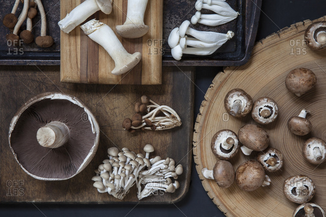 Various mushrooms from above