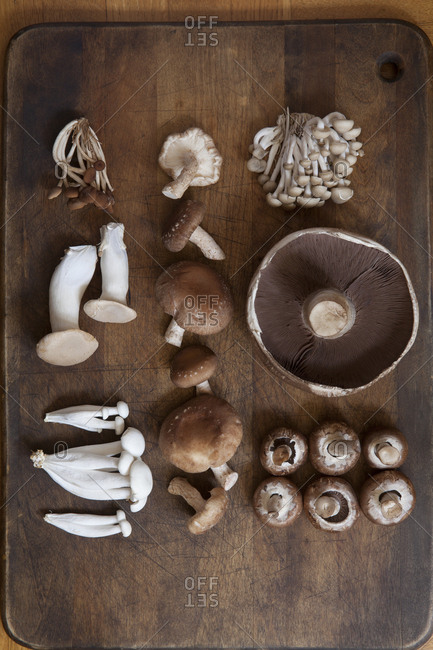 Various mushrooms in arrangement